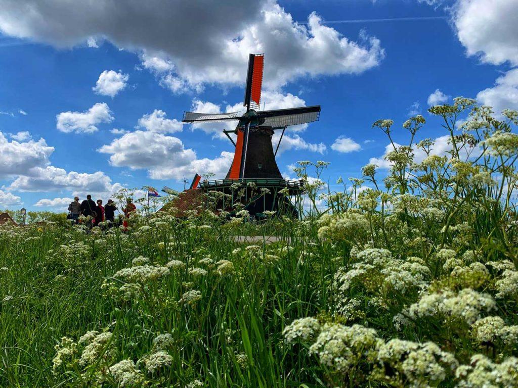 تحصیل دکترا در هلند و مزایای تحصیل